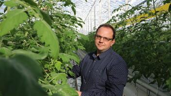 case study, testimonial, greenhouse, grodan, grower